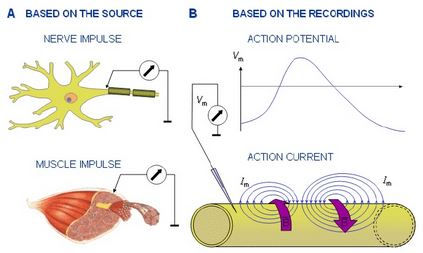 Website Biopotentials diagram.JPG