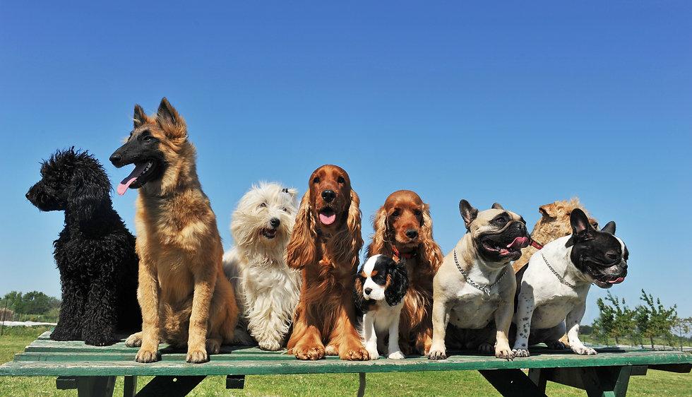 Dogs on Table.jpg