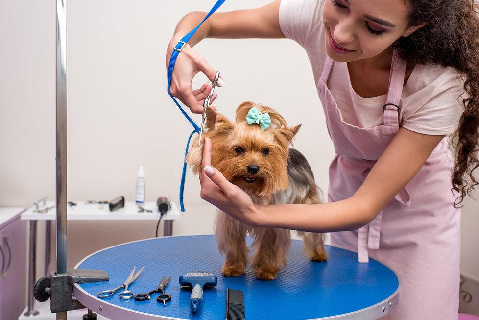 Dog Grooming 6.jpg