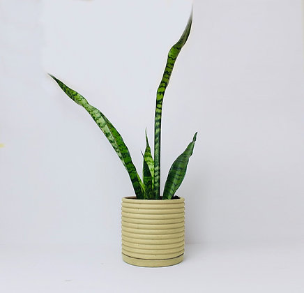 Ribbed Planter