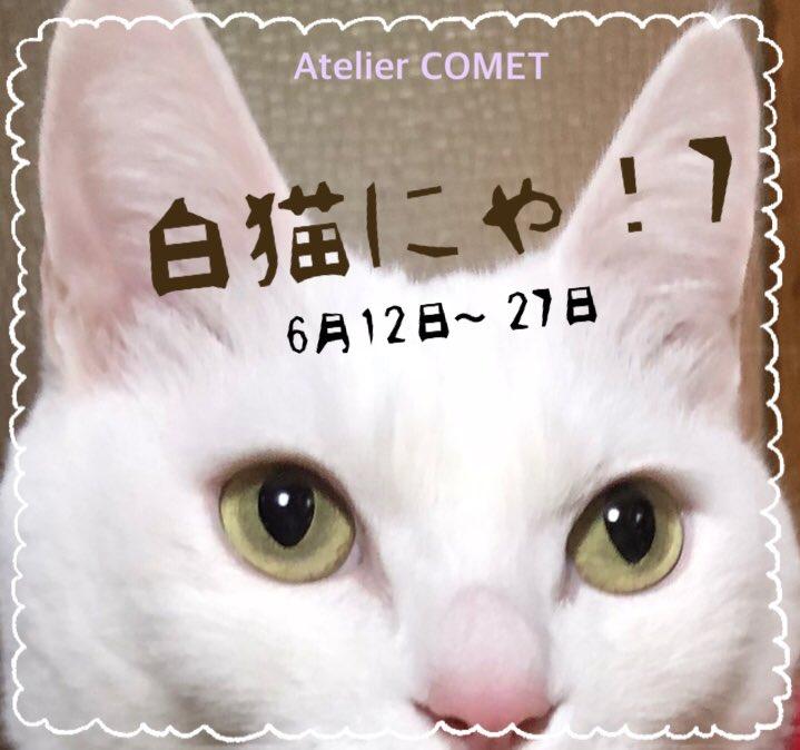 白猫にゃ~7