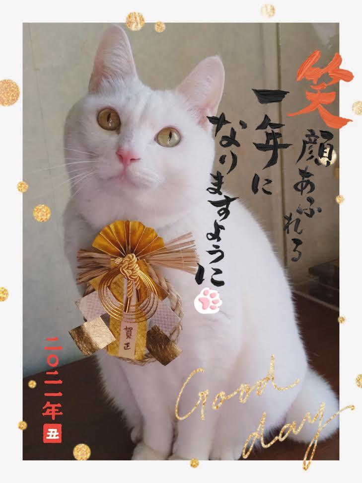 看板白猫スピカ