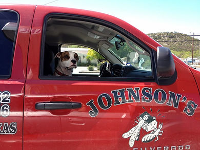 Friendly dog in Johnson's Pest Control Truck