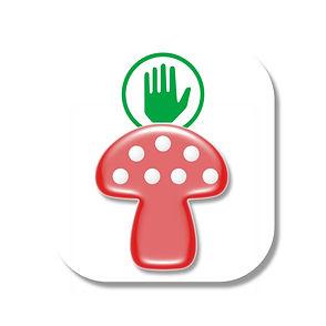 Intossicazioni, funghi, avvelenamento, micologi, raccolta, rischio,