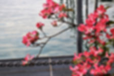 flower-3373945_1920.jpg