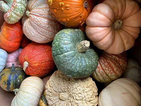 Multi colored hard squash of greens, orange and yellows