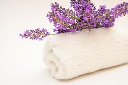 lavender-5348164