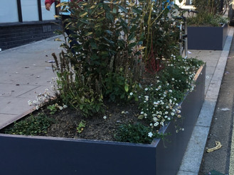 New planters on Station Rise