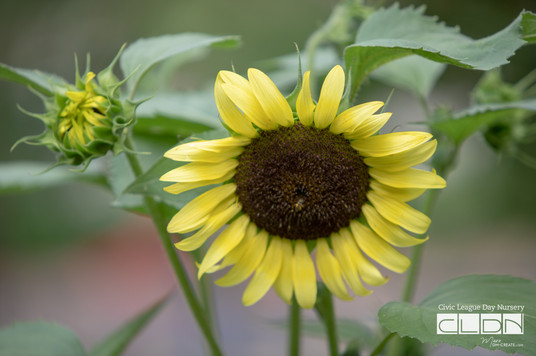 071719 CLDN GardenPlay-7588.jpg