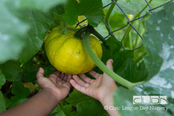 CLDN Garden-374