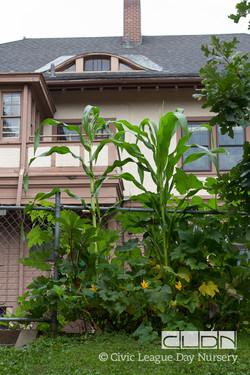 CLDN Garden-395