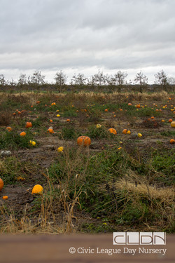 CLDN Apple Orchard-35.jpg