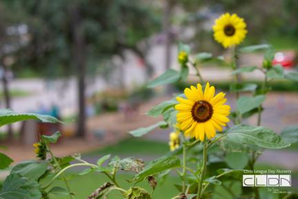 071719 CLDN GardenPlay-7591.jpg