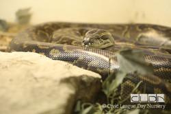 CLDN RAD Zoo-170308-4717