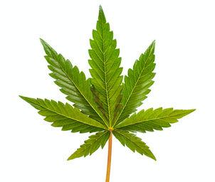 Cannabis.Marijuana.Defense Attorney.jpg