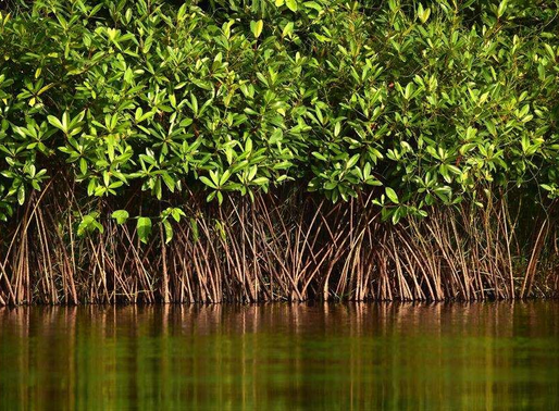Environment Ministry Panel look towards building mangrove cells across all coastal cells