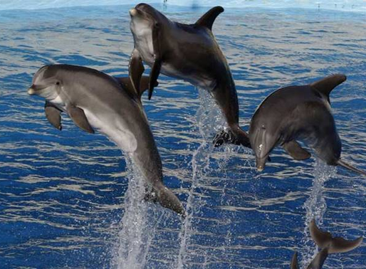 PM Narendra Modi announces 'Project Dolphins' on the 74th Independence Day