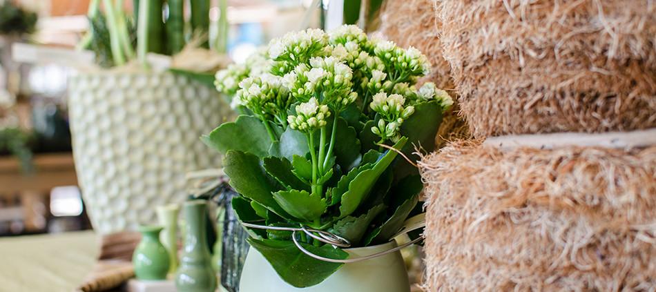 Blumen Angerer - Dekoration