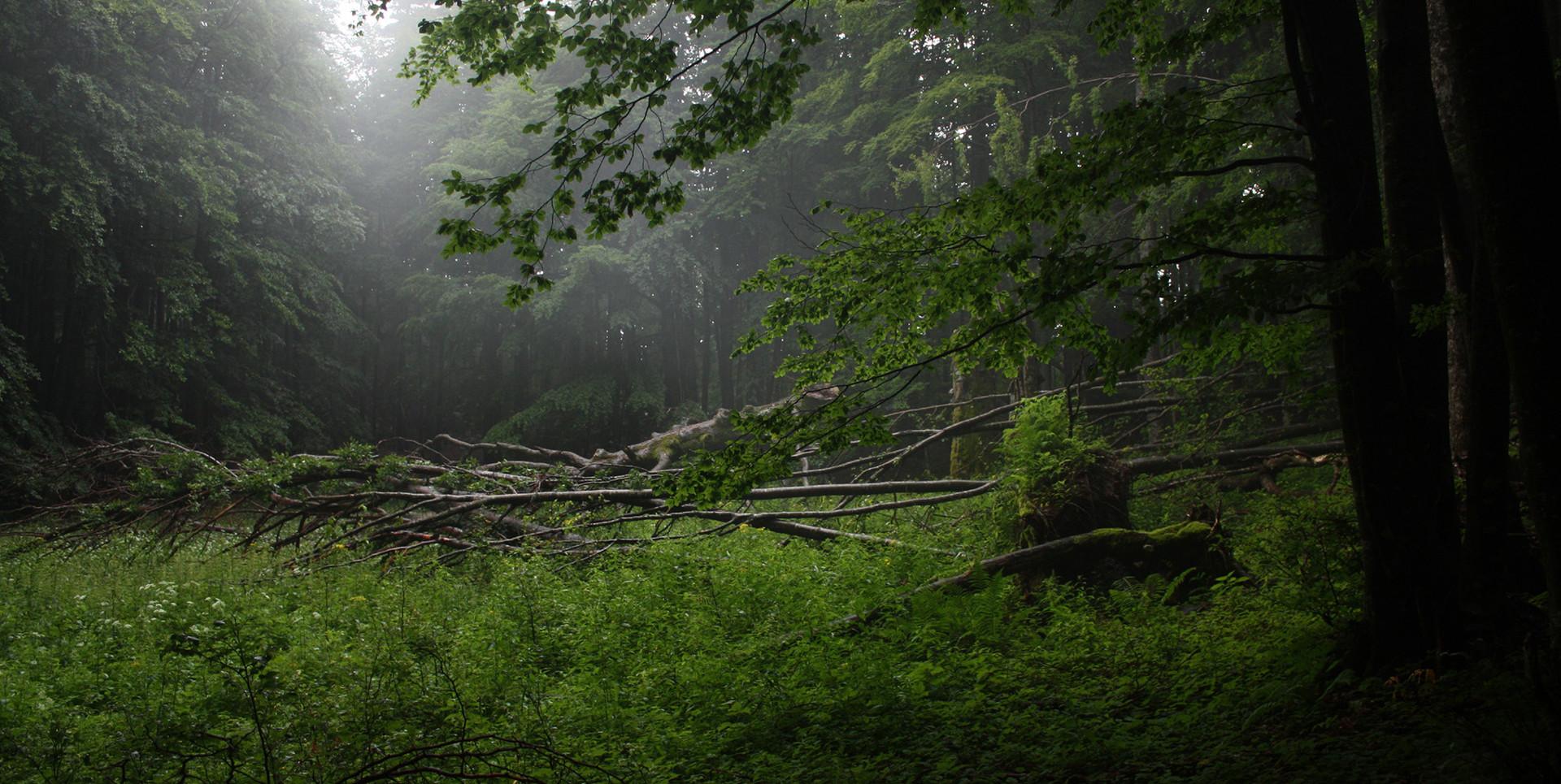 Experience Wilderness GmbH
