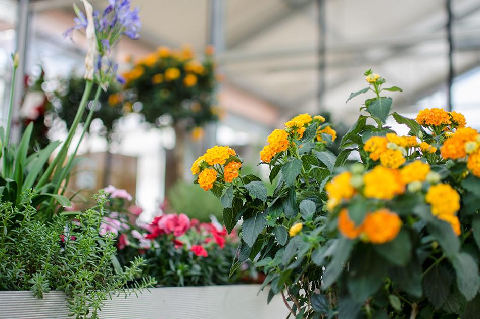 Blumen Angerer - Zustellung & Lieferung