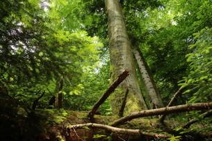 Wir wandern sogar an den Rand eines unberührten Urwalds!