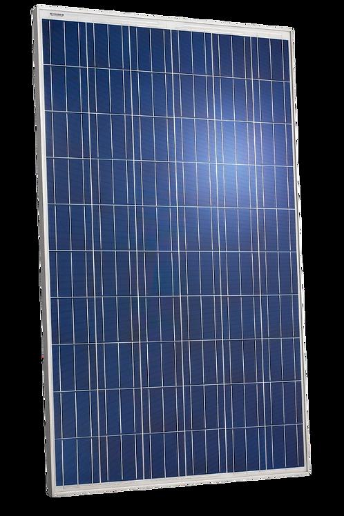 MOD169 - 270Wp Prime Solar Module (RB)