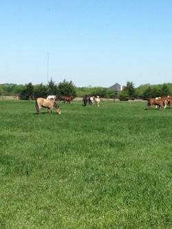 horses8.JPG