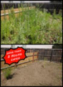 Weedss.png
