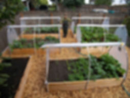 pictures-of-vegetable-garden-fresh-garde