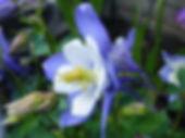 flower-1815802_1280.jpg