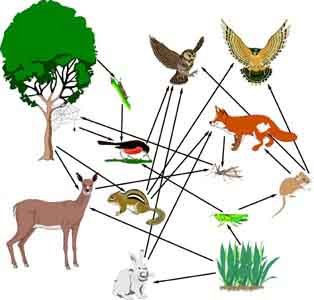 food webs of asian grasslands