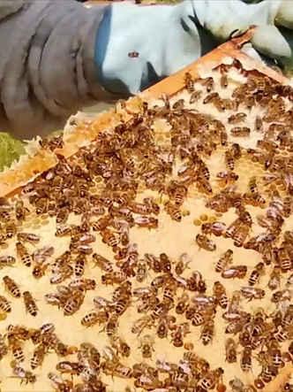 beehive check .jpg
