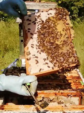 beehive check 2.jpg
