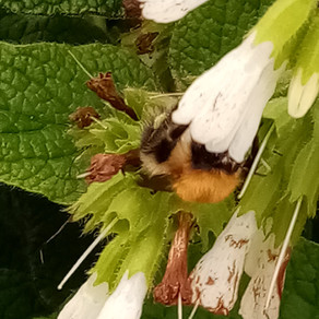 BEES NEED WEEK