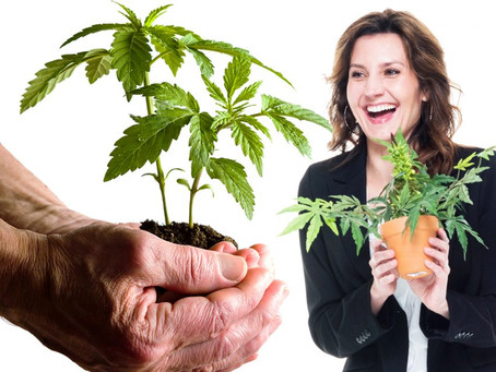 Debunking 5 Cannabis Stock Images