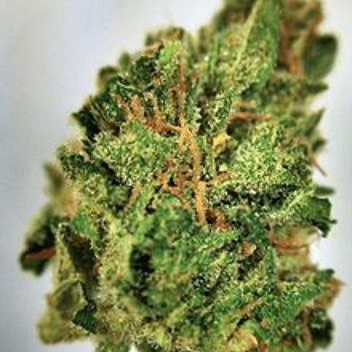 TangTang weed strain