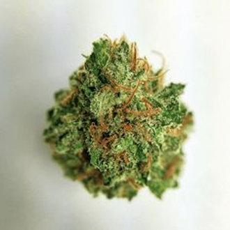 Money Maker marijuana strain