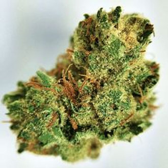 SuperSnowdawgmarijuana strain