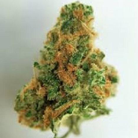 Snowcap weed