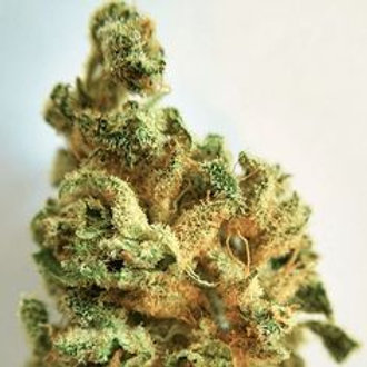 Kolossus marijuana strain