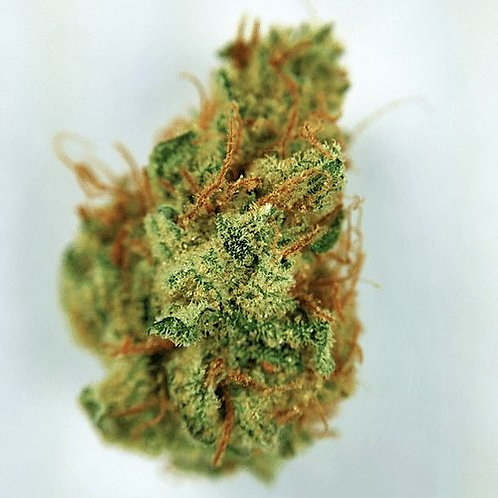 Chem Scout marijuana strain