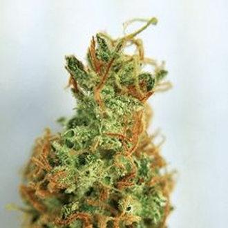 MexicanSativa marijuanastrain