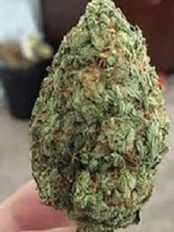 Chronic marijuana