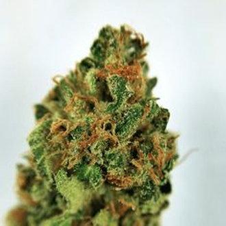 Road KillSkunk marijuana