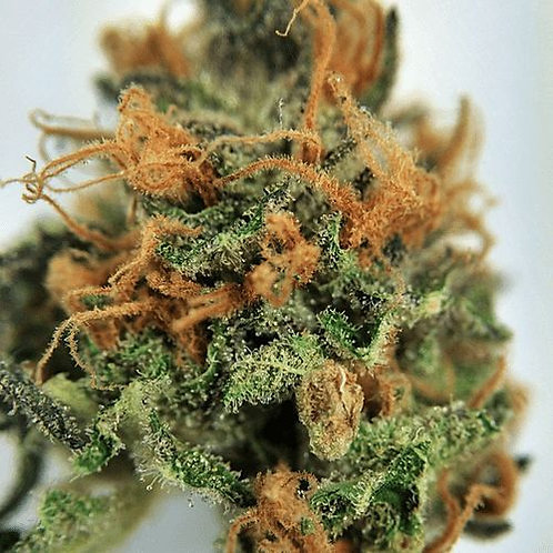 Dream Police marijuana strain