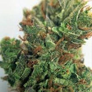 MullumbimbyMadnesscannabis strain