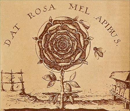 dat rosa 2.jpg