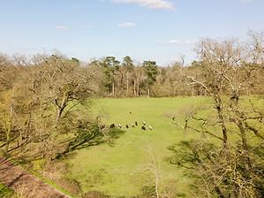 Chevaux au près vus par Drone à Poitiers