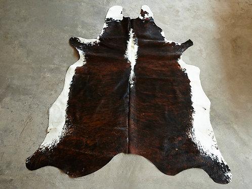 P19- 3,39 m2 Tigrée sombre et ventre blanc