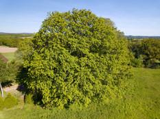 Beaufort Drone photo chêne séculaire faune flore Limousin Limoges